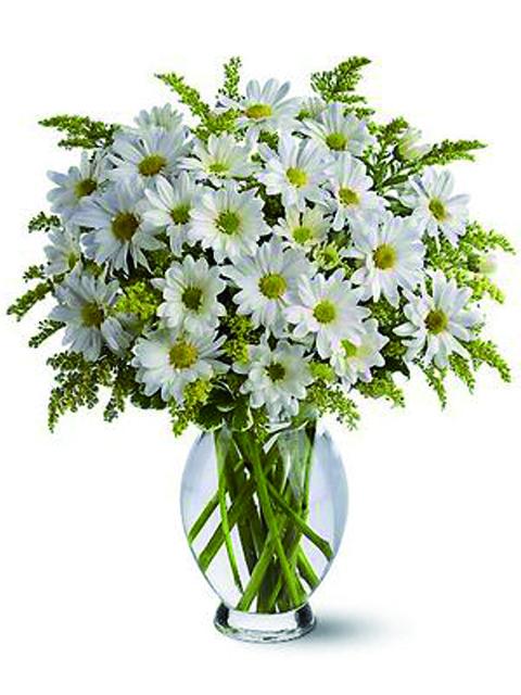 Bouquet di margherite bianche a Roma