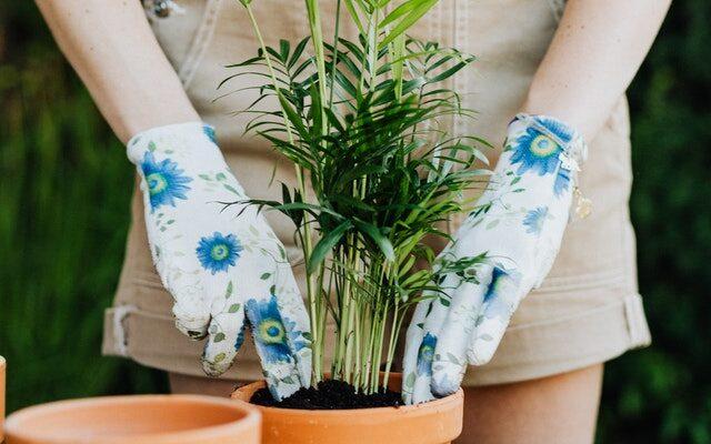 annaffiatura delle piante